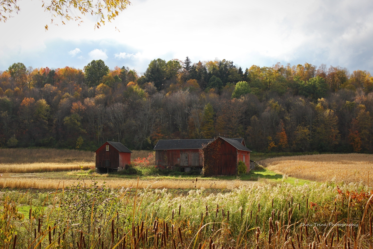 Old barns in a fall field (photo)